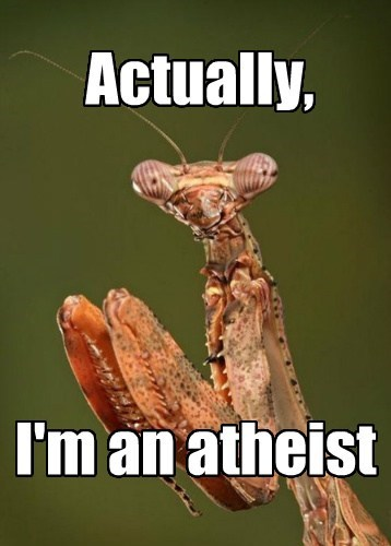 athiest praying mantis - 8213368576