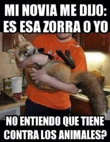 bromas Memes animales - 8213379584