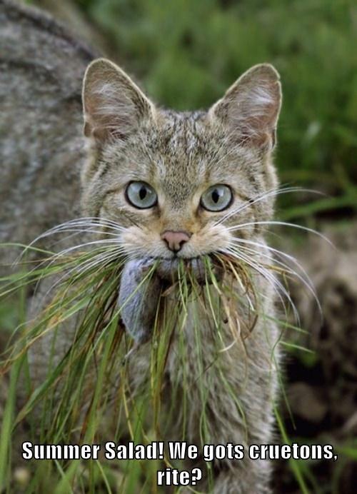 hunting Cats salad - 8213451520