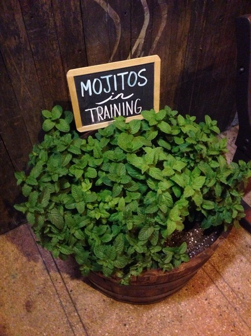 sign mint mojito funny after 12