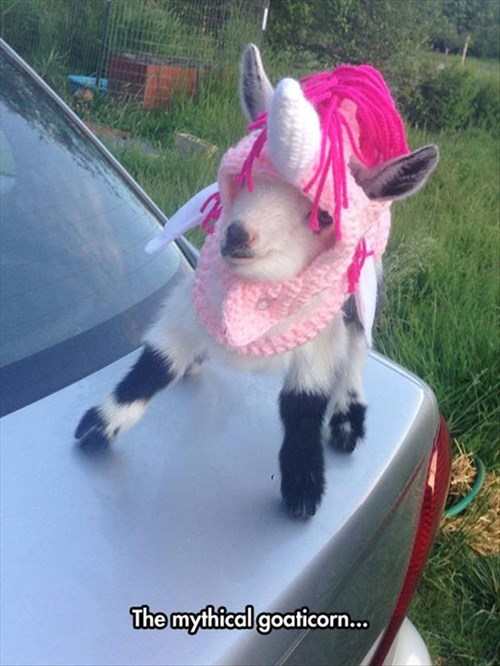 Goats - The mythical goaticorn...
