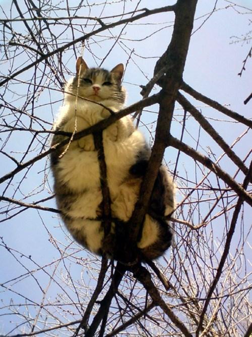 climbing cute Cats - 8213569280