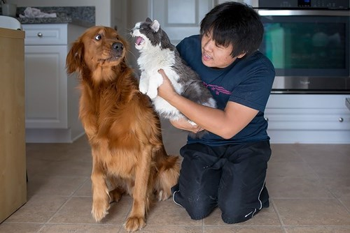 dogs hiss friends Cats - 8213594880