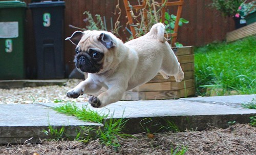puppy cute superheroes flying - 8213606144