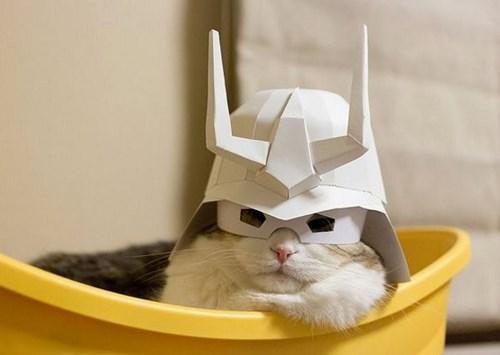 lazy masks Cats funny - 8213626880
