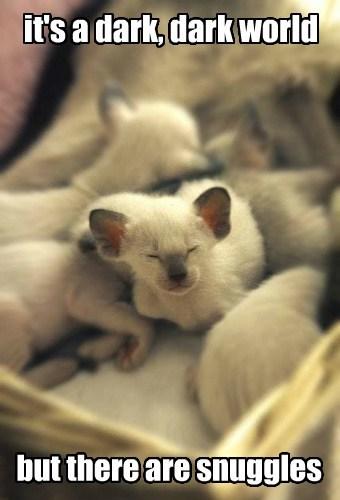 kitten tiny cute - 8213853952