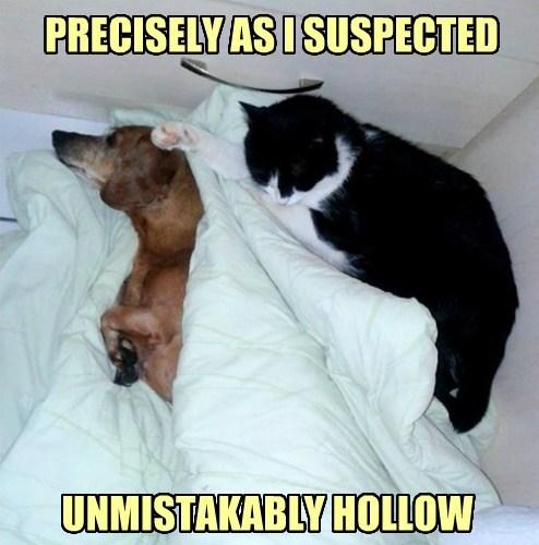 Cats stupid - 8213889024