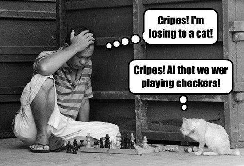 Cripes! I'm losing to a cat! Cripes! Ai thot we wer playing checkers!