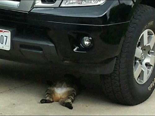 mechanics,cars,Cats