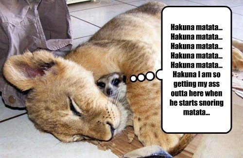 lions scary napping lion king funny - 8213980416