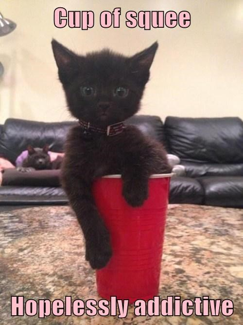 Red Solo Cup Cats squee - 8214068224