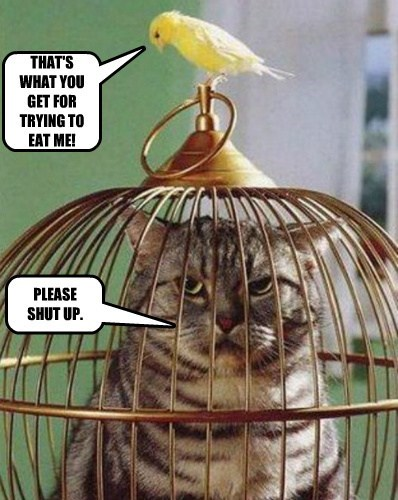 tricked birds embarrassed Cats - 8214091520