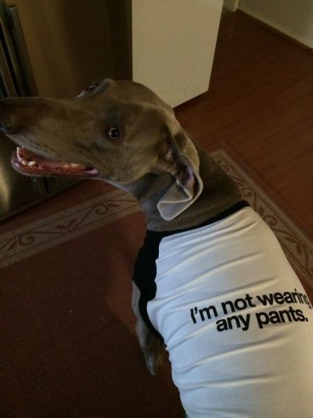 naked dogs shirts poorly dressed g rated - 8214329600