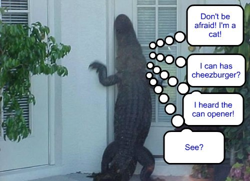 crocodile,disguise,Cats,funny