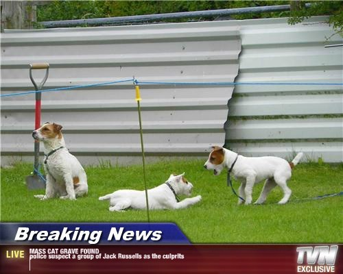 Breaking News - MASS CAT GRAVE FOUND police suspect a group of Jack Russells as the culprits