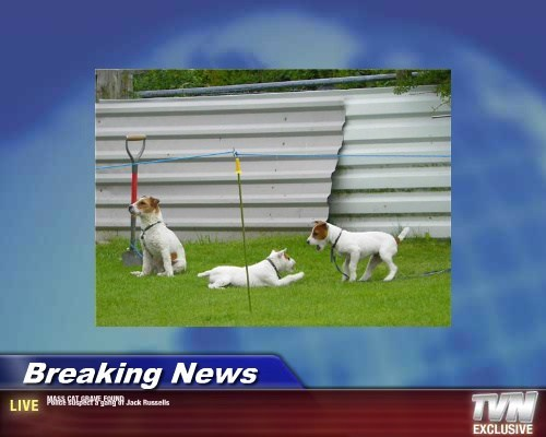 Breaking News - MASS CAT GRAVE FOUND Police suspect a gang of Jack Russells