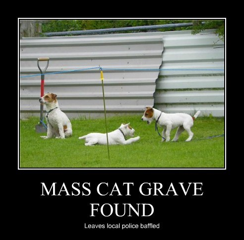 MASS CAT GRAVE FOUND Leaves local police baffled