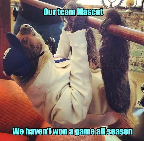 sloths,mascots,funny