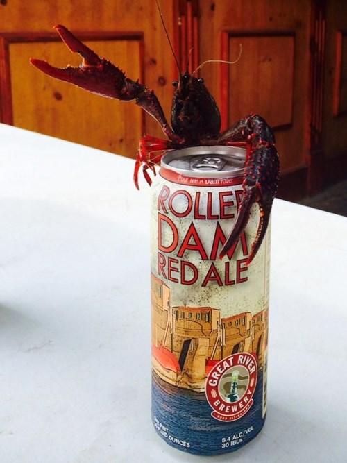 beer,crawdads,funny