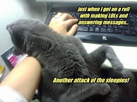 cute Cats sleeping - 8215346432
