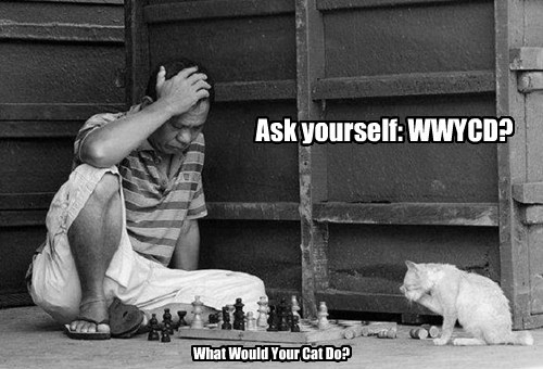 Ask yourself: WWYCD? What Would Your Cat Do?