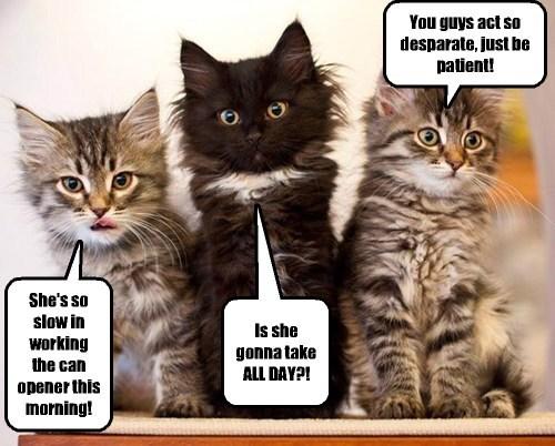 breakfast cute Cats - 8215900928