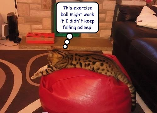 exercise comfort Cats