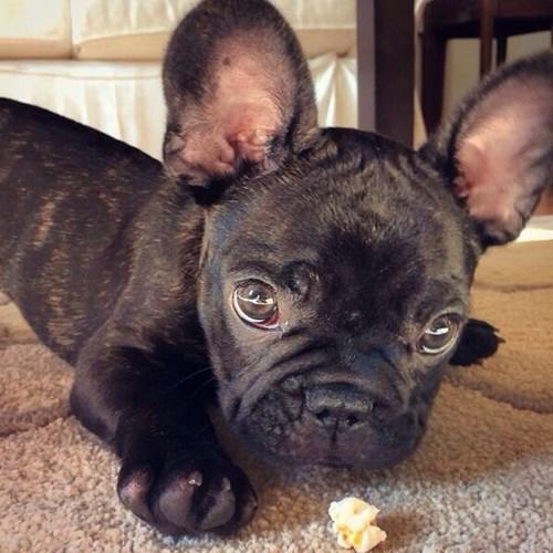 dogs Popcorn - 8216273152