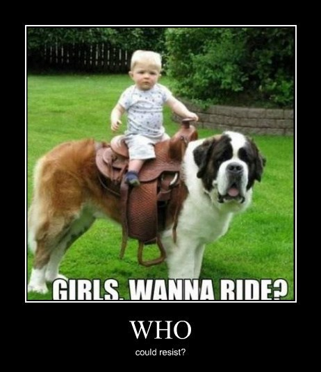 dogs,kid,saddle,funny