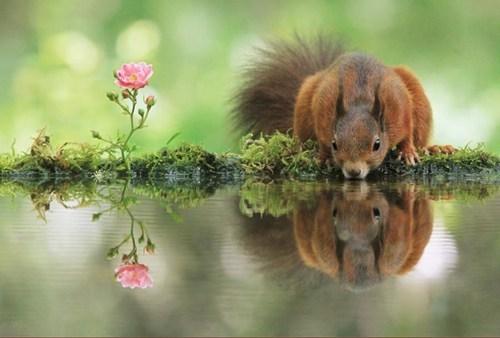 cute squirrels - 8216664320