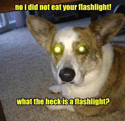no i did not eat your flashlight! what the heck is a flashlight?