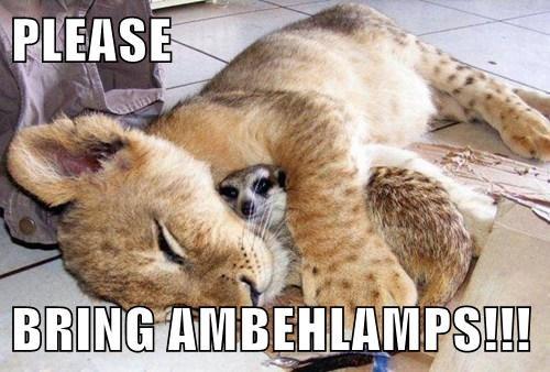 lions,meerkat,scared