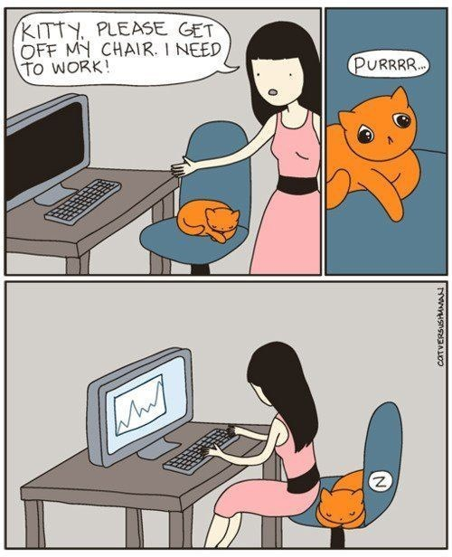 chair,sick truth,Cats,web comics