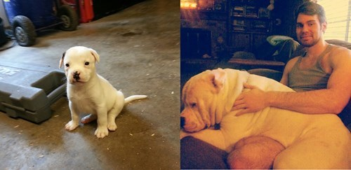 dogs,grow up,cute,huge
