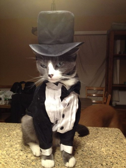 tuxedo,poorly dressed,top hat,Cats,g rated