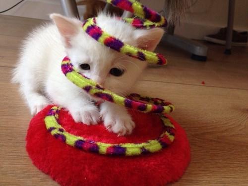 kitten,toys,stuck