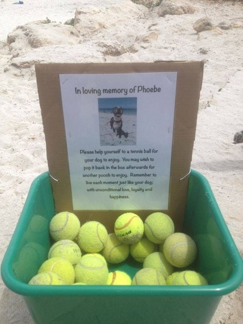 fetch,dogs,memorial