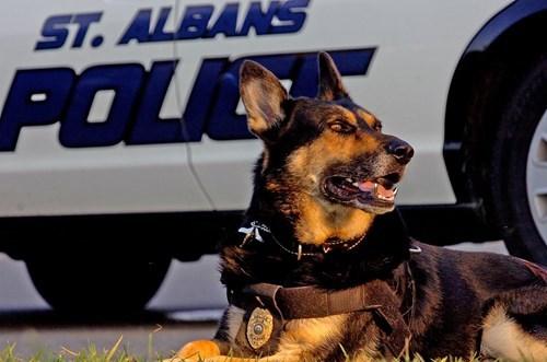 police dog teeth titanium - 8217066240