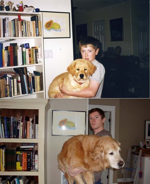 dogs,puppies,cute,Then And Now,love