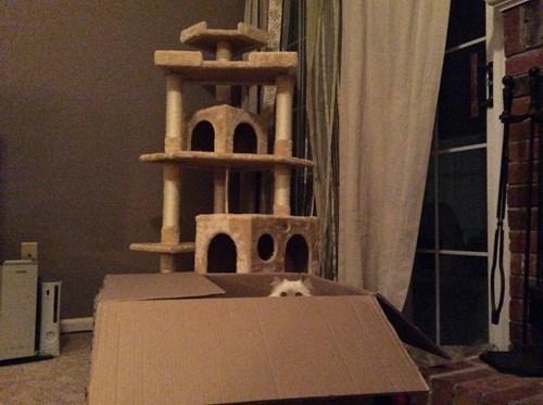 boxes cat condo Cats funny - 8217077760