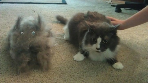cat hair,brushing,Cats,funny,googly eyes