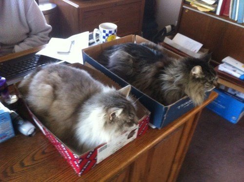 work if i fits i sits organized Cats
