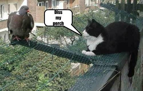 perch birds Cats - 8217118464