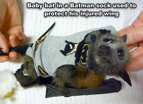 injury,bats,batman