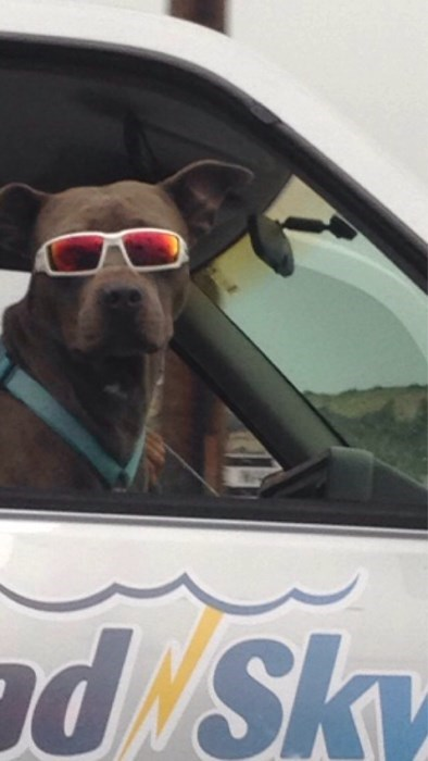 dogs,sunglasses,poorly dressed