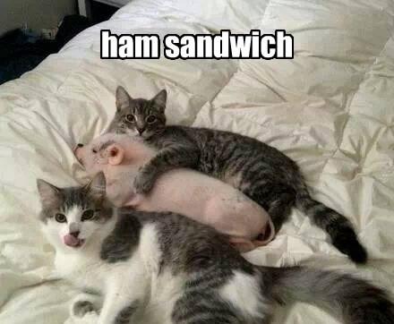 ham pig puns Cats - 8217944576