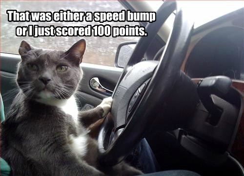 driving Cats funny - 8217982976