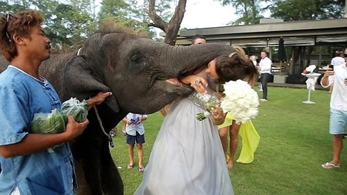 bride,wtf,elephant,wedding,g rated,dating