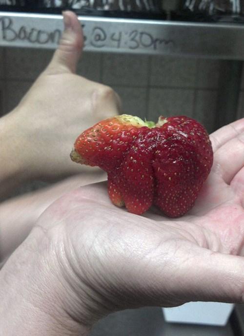 strawberry fruit - 8218312704