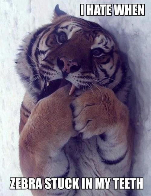 zebra tigers teeth - 8218369024